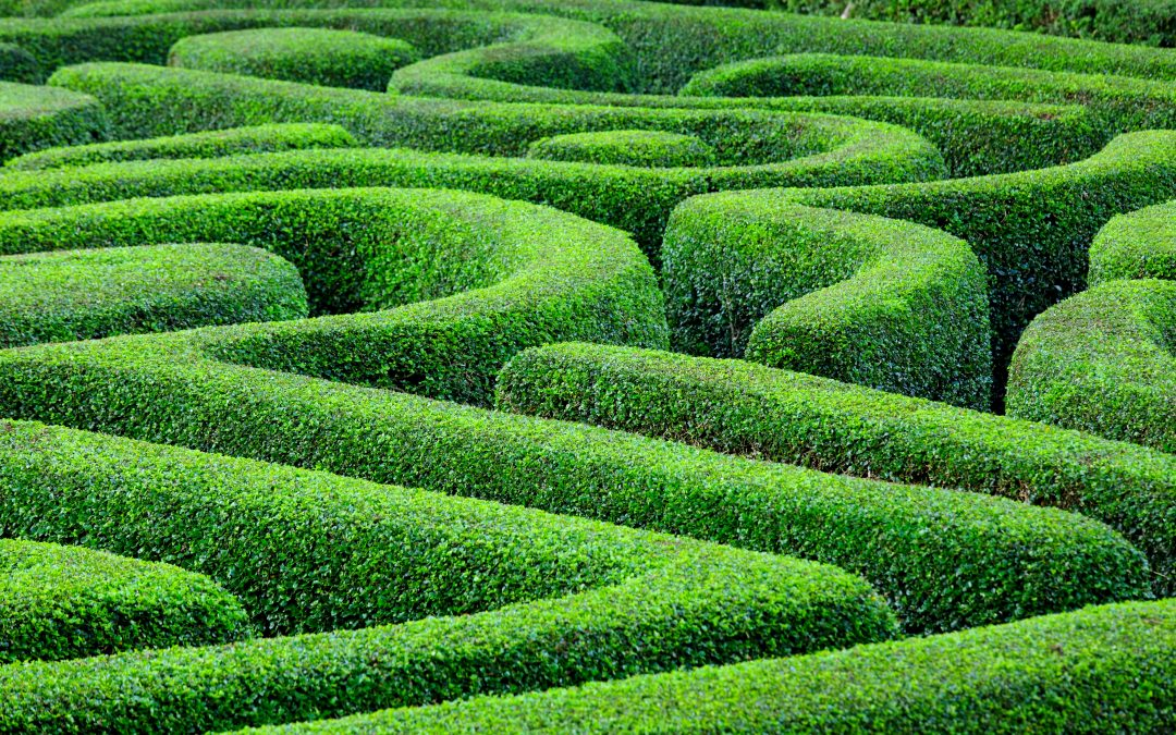 Meet Mike's Maze – Every Year, Mike's Maze is Intricately Designed With a GPS Signal