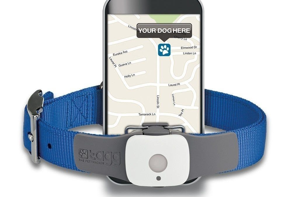 Top 10 GPS Pet Trackers Available On The Market