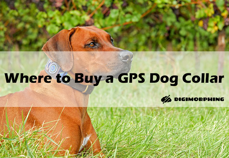 Tips On Where To Buy The Most Reliable GPS Dog Collar