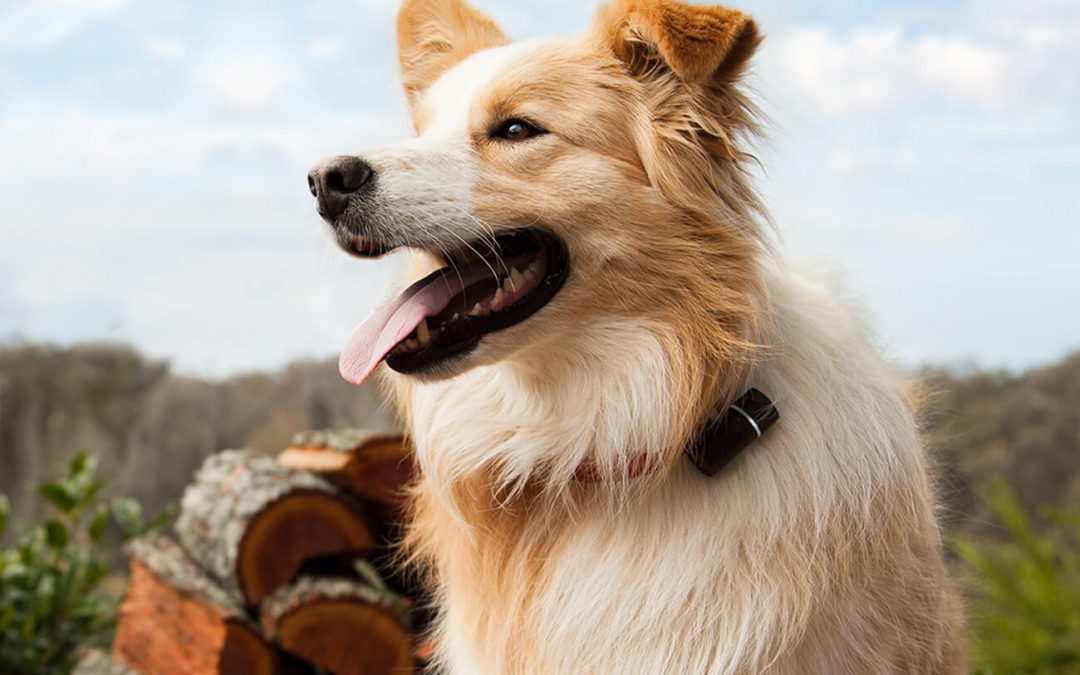 Pod 3 GPS Pet Tracker: The Best GPS For Dogs Out There