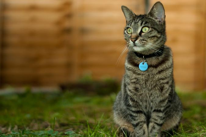 Top 12 Cat GPS: No More Worrying Where Your Pet Is